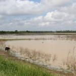 Moist Soils Area Spring 2012
