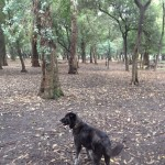 Domino on the hunt for squirrels - Gandhi Park