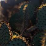 Cactus in Sunlight