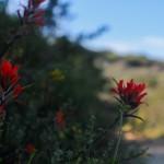 Laguna Wildflowers
