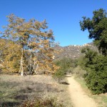 Laurel Canyon Trail